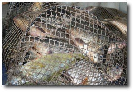 Федеральная рабочая группа по борьбе с браконьерством осмотрела ход путины в Астраханской области